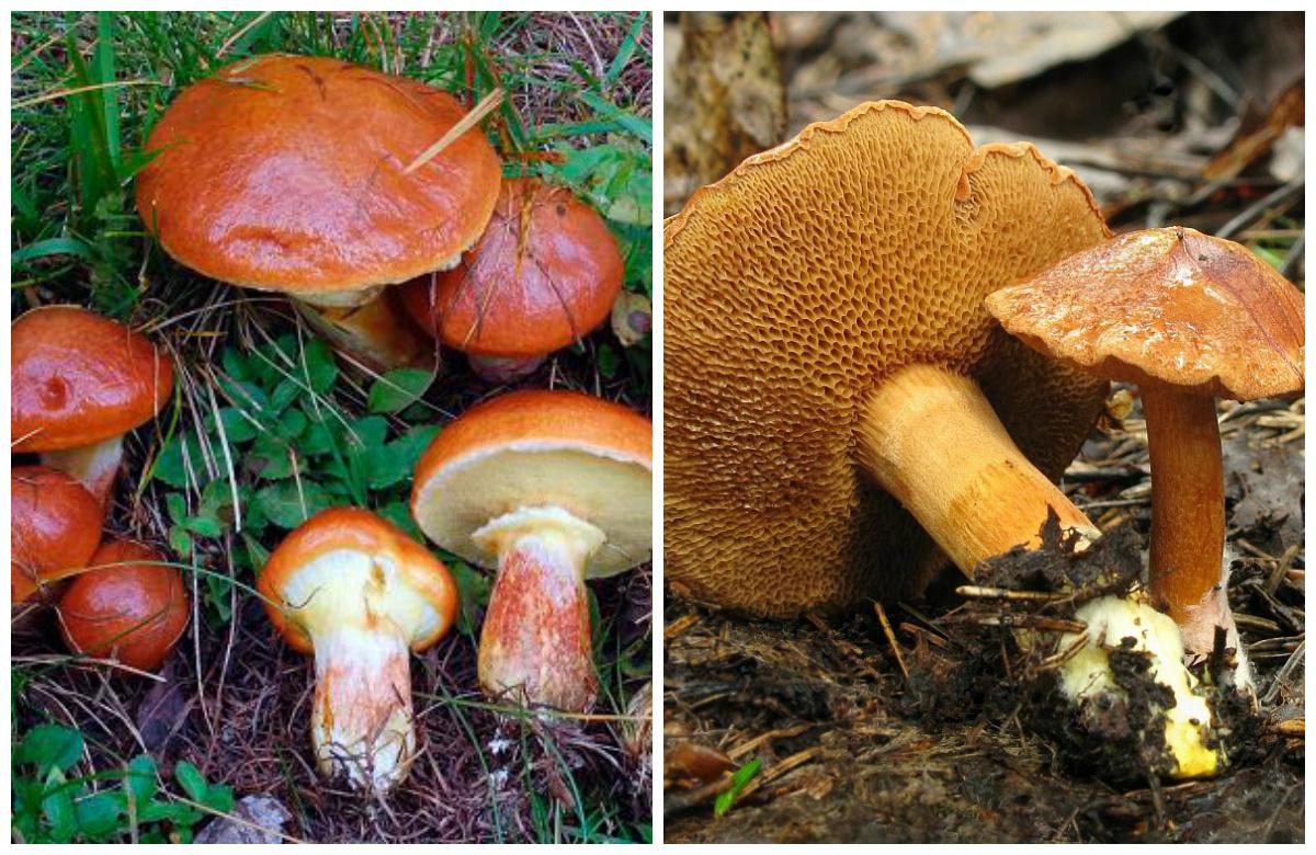 поездка в лес за грибами