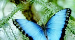 притча уроки бабочки