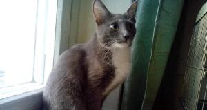 Теплые коты. Конкурс статей